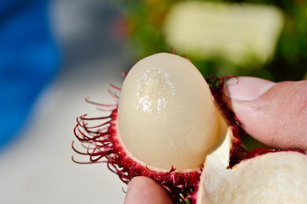rambutan / lychee