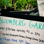 Bloomberg Gardens