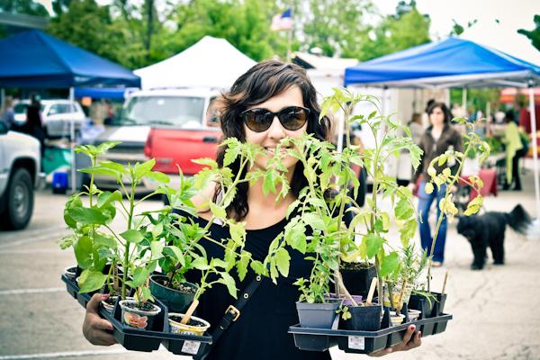farmers market, starter plants, garden