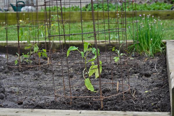 garden - day one