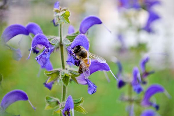 bees-in-garden-2