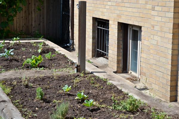 Denver Urban Garden
