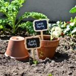planters-garden