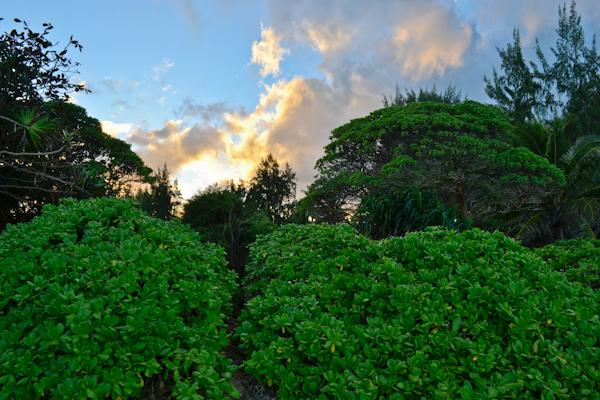 Kailua, O'ahu Hawaii