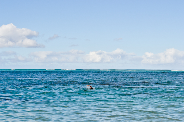 swim in O'ahu