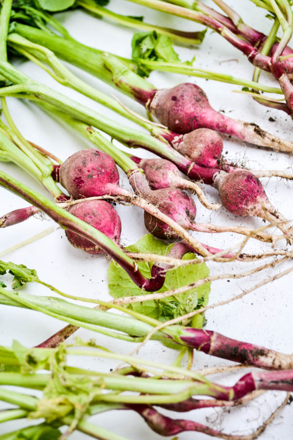 on growing radishes