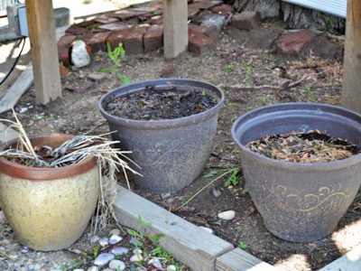 Garden Beds Weeds Allure 6
