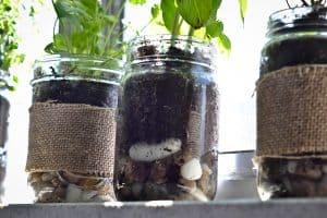 Diy Indoor Herb Garden // Peace. Love. Quinoa