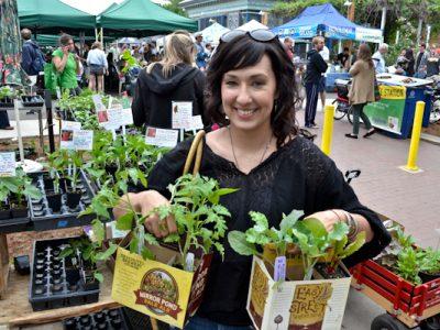 Starter Plants From Farmers Market